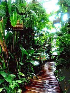 Walkway to paradise. walkway to paradise tropical garden design, tropical backyard Tropical Garden Design, Tropical Backyard, Tropical Landscaping, Front Yard Landscaping, Tropical Plants, Landscaping Ideas, Backyard Ideas, Tropical Gardens, Landscaping Software