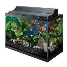 Dutiful discovered aquaponics system Save me a spot Aquaponics Greenhouse, Aquaponics System, Hydroponics, Planted Aquarium, Aquarium Fish, 10 Gallon Fish Tank, Different Fish, Unique Animals, Unique Pets