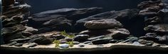 African cichlid hardscape (some lovely plecos in this tank)