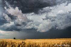 Landscape Photography, Whimsy Photography, Cloud Print, Storm Art, Cotton Skies, Kansas Scenes, Golden Fields, Wheat Fields, Blue and Gold