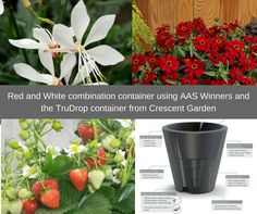 crescent garden planters. Container Gardening With AAS Winners Crescent Garden Planters
