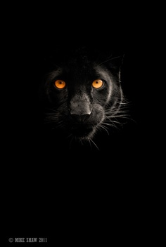 Electric panther panther cats big cats animals desktop electric panther panther cats big cats animals desktop background amazing animals pers wild animals farm animals wallpapers pinterest panther voltagebd Images
