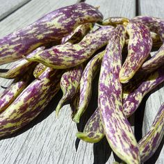 Organic Dragon Tongue Bean Heirloom Vegetable Seeds