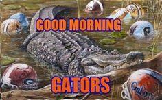 . Florida Gators Football, Football Baby, College Football, Football Team, College Sport, Denver Broncos, Baseball, Florida Gators Wallpaper, Florida Girl