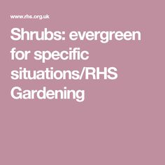 Shrubs: evergreen for specific situations/RHS Gardening