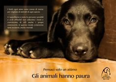 #Botti di #Capodanno: pensaci solo un attimo. Gli #animali hanno paura. #buttaibotti