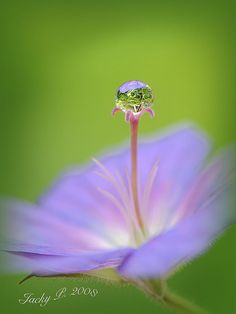 Flower with Dewdrop - Micro Photo  Nature's Little Gem by Jacky Parker