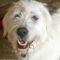 Meet Trooper - new! a Dog for Adoption. All Dogs, I Love Dogs, Cute Dogs, Shelter Dogs, Rescue Dogs, Beacon New York, Animals And Pets, Cute Animals, Dog Pounds
