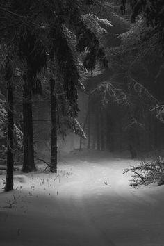 New Landscape Photography Woods Winter Scenes Ideas Winter Photography, Landscape Photography, Alone Photography, Black Photography, Monochrome Photography, Beautiful World, Beautiful Places, Beautiful Forest, Winter Szenen