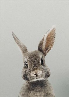 ♡ Breakfast at Chloe ♡ - Cathy F- # Breakfast - Hundebabys - Adorable Animals Cute Baby Animals, Animals And Pets, Funny Animals, Animals Images, Bunny Images, Jungle Animals, Nature Animals, Wild Animals, Beautiful Creatures