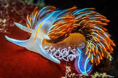 The ocean is vast and mysterious, populated with alien like colorful creatures. These sea slugs are mesmerizingly beautiful. Beneath The Sea, Under The Sea, Glaucus Atlanticus, Ocean Depth, Sea Snail, Fotografia Macro, Sea Slug, Underwater Creatures, Ocean Life