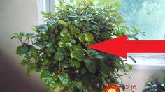 10 świetnych sposobów, by utrzymać dom w perfekcyjnej czystości Flower Power, Life Is Good, Diy And Crafts, Aloe Vera, Herbs, Flowers, Gardening, Remedies, Education