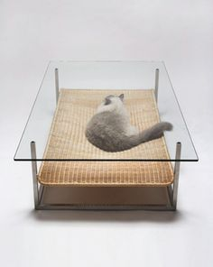 Coffee Table With A Hammock Dog Bed