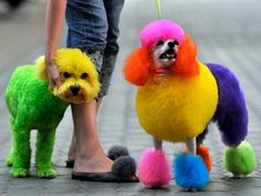 Colourful dog grooming boom sweeps China