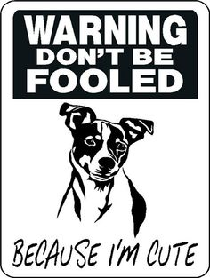 Jack Russell Warning