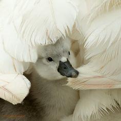 Veilig onder moeders vleugels.