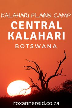 Experience Kalahari wilderness magic when you visit Kalahari Plains Camp in the Central Kalahari Game Reserve, Botswana. Chobe National Park, Kruger National Park, Brown Hyena, Bat Eared Fox, Africa Destinations, Travel Destinations, All About Africa, Okavango Delta, Sleeping Under The Stars