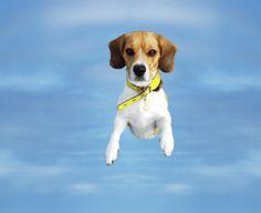 Flying Beagle