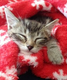 12 cozy, cuddly pets who are beating the cold weather