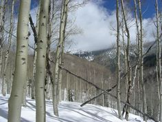 NM is so gorgeous that we don't even mind the snow.