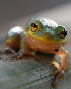Frog by thewrighttouch07 - Erin Wright