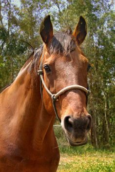Straight Flush // Half brother to Secretariat. Was rescued from a Texas feed lot in 1999 for only $200.  On September 3rd, 2007 he passed away in his sleep at age 32.  RIP
