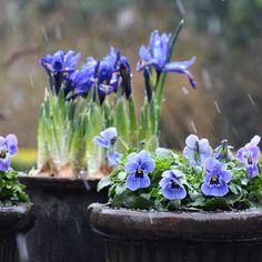 "Polubienia: 984, komentarze: 36 – Mette Fauerskov (@mettebfauerskov) na Instagramie: ""I wonder how it feels to be a flower today.... ❄️ Gad vide hvordan det føles at være blomst i dag…"""