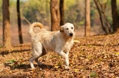 What Dogs Chasing their Tails can Reveal about OCD