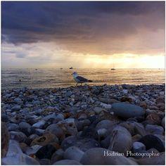 Plage du Havre - ©insta_foxographie
