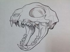 #sketch Cat Skull #ilustracion #craneo #huesos #creepy