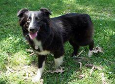 Tonka (pet dog reference)
