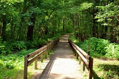 Whether you want to hike or bike, these are the best trails in Illinois.