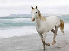 paard - Google zoeken