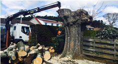 Get Professional Tree Surgeon Services At Very Affordable Price -You should choose only well trained experienced tree surgeon. You can get maximum positive benefit by choosing skilled and experienced tree surgeon. Tree Surgeons, Benefit, Canning, Home Canning, Conservation