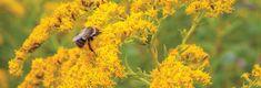 Honey Bee Tracheal Mite | Clemson University, South Carolina