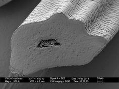 human hair microscope - Google Search