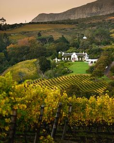 Constantia Glen has published a stylish coffee-table book for wine lovers. Featuring breathtaking photography, it showcases the estate's journey so far. Visit South Africa, Heavenly Places, Local Photographers, Cape Town, Places To See, Vineyard, Beautiful Places, Cape Dutch, Scenery