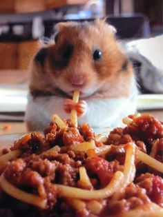 villagevoice:    This picture, from British dentist Toby Dignum, is insanely cute. Turns out, hamsters eat spaghetti all the time.