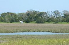 Botany Bay SC | Botany Bay Plantation Heritage Preserve and Wildlife Management Area