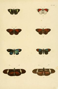The Biodiversity Heritage Library works collaboratively to make biodiversity literature openly available to the world as part of a global biodiversity community. Moth, Insects, Literature, Animals, Zoology, Anatomy, Literatura, Animales, Animaux