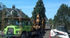 Chicago home during services Tree Transplanting, Business Place, Specimen Trees, Door Steps, Summer Winter, Spring, Moving Services, Shades, Landscape