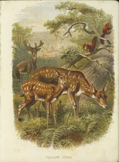 Vintage drawing of a deer and fawn by Charles Livingston Bull. Pen and ink style drawing of the deer standing in the grass and flowers. Wildlife Paintings, Deer Paintings, Family Drawing, Deer Family, Vintage Drawing, Forest Friends, Autumn Art, Woodland Creatures, Squirrel