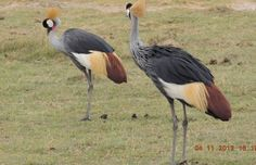 The Kenya safari tour visits the scenic and dramatic Tsavo West national park with its awesome scenery, rhino sanctuary and the Mzima springs.    The Mombasa Kenya safari departure explores the Amboseli national parks with its hundreds of elephants and great views of Mount Kilimanjaro.  http://www.naturaltoursandsafaris.com/mombasa_kenya_safaris.php