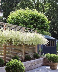 Incredible Modern Garden Planting Scheme With Raised Garden Beds Wow - Modern De. - Incredible Modern Garden Planting Scheme With Raised Garden Beds Wow – Modern Design Sie sind an d - Small Courtyard Gardens, Small Courtyards, Back Gardens, Small Gardens, Outdoor Gardens, Courtyard Ideas, Privacy Landscaping, Outdoor Privacy, Small Garden Design