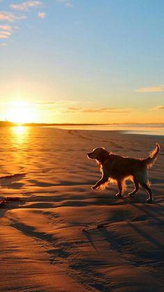 *Sunset walk along the beach with my dog.