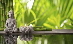 Ázia je hotovou studnicou poznania. Či už ide o jógu, tradičnú čínsku medicínu alebo rôzne bojové umenia, veľmi radi sa inšpirujeme a preberáme...