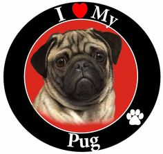 Dog Breed Magnets I Love My Pug  Dog Breed Magnets I Love My Pug Dog Breed Magnets I Love My Favorite Car Dog Magnets Car Magnet Easy On-Easy Off! Great for Cars, Trucks, Refrigerators, Lockers, Kids or any Magnetic Surface Dog Breed Magnetic Express your love for your pet with our dog breed and animal magnets