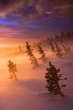 Towards The Light ~  dawn during a brutal winter storm in the Rockies, Colorado by Light of the Wild