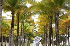 Riu Palace Riviera Maya Wedding - Destination Wedding Mexico -palm trees - RIU Hotels & Resorts