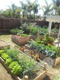 garden design - Our backyard used to be a wasteland of weeds & a far from perfect lawn After years of watering to keep the grass green tripping over gofer holes Veg Garden, Vegetable Garden Design, Fruit Garden, Edible Garden, Vegetable Gardening, Organic Horticulture, Raised Garden Beds, Raised Bed, Dream Garden